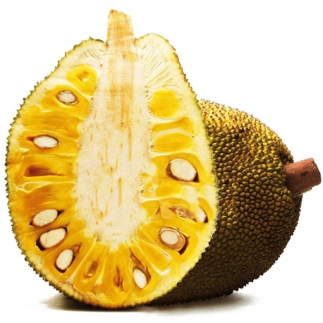 Jack Fruit Fresh (Fenne)