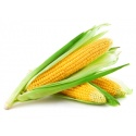 Fresh Corn maize (Kasooli) Large Each
