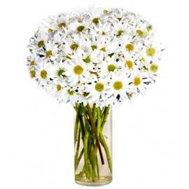 White Mum Flowers