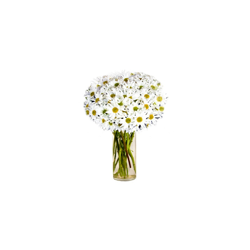 Buy white mum flowers with uganda delivery white mum flowers loading zoom mightylinksfo