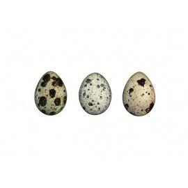 Cliff Quails  Eggs  (1X12)