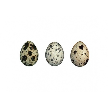 Cliff Quails  Eggs  (1X12)