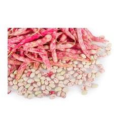 Fresh Beans 500g